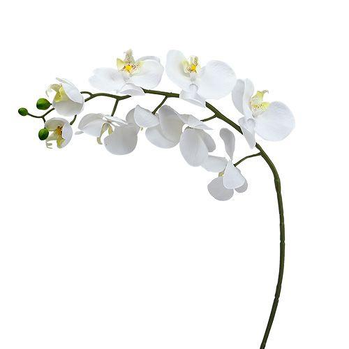 Møll orkide 75cm hvit