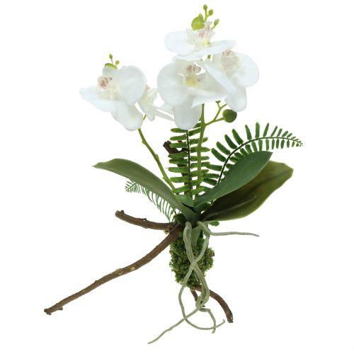 Orkidéhvit med mosekuler og røtter 36cm