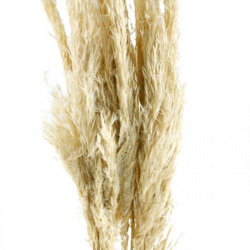 Pampas gress, tørket, bleket 75cm For en tørr bukett Bunt på 10 stykker