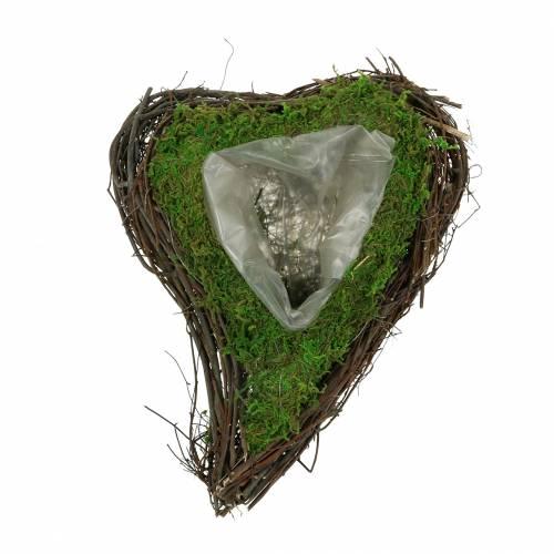 Plant hjertevintre, mose 22cm x 28cm H8cm