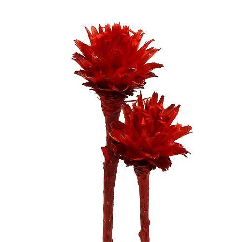 Plumosum 1 rød 25stk