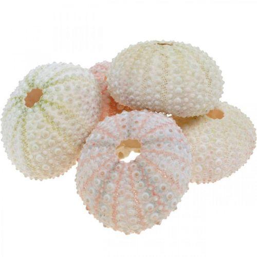 Maritim deco kråkebollehus rosa, hvit scatter deco 55stk
