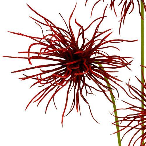 Silkeblomster Xanthium Bordeaux 64cm 4stk