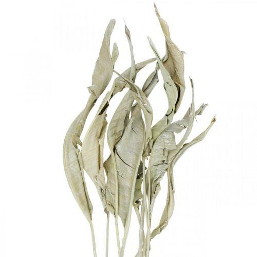 Strelitzia blader tørket grønn frostet 45-80cm 10stk
