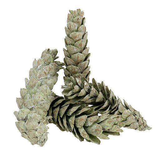 Strobus-kjegler som naturlig dekorasjon 15cm - 20cm grønn 50stk