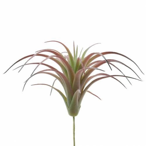Tillandsia grønn-rød flokket 15cm 4stk
