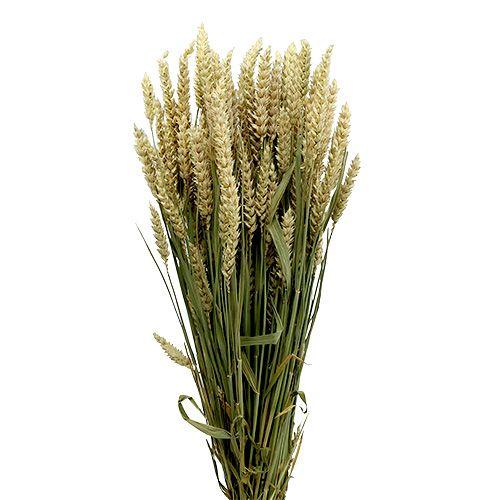 Wheat Bund Natur 1St dekorativ hvete