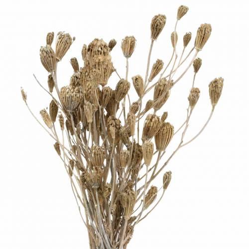 Wildflower Bunch, naturlig ryllik, vasket hvit 30–60cm 150g