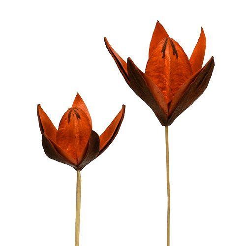 Vill lilje på en pinne oransje 45p